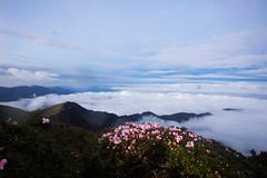 -1 (billlushana1) Tags: travel cloud mountain flower tree sony taiwan hike peaks  taroko tw  tarokonationalpark hehuanshan    mountain 100peaksoftaiwan taiwantop100peaks sonya7r