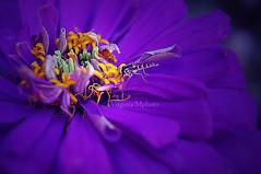 flower :) (virginiamphoto) Tags: flowers fleurs shoot photographer passion byme jadore