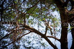 IMG_3550-2 (hcjonesphotography) Tags: africa park elephant black tree nature birds animal umbrella tanzania monkey cub rainbow buffalo jackal eagle crane outdoor lion tent lodge lizard ostrich safari ngorongoro national leopard crater rhino lions zebra cheetah giraffe hippo impala serengeti hyena maasai hornbill stork mongoose wildebeest warthog manyara tarangire dikdik tented