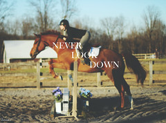 (suzcphotography) Tags: horse never look sport canon 50mm jump jumping graphic quote edited down riding motivation hunter equestrian edit equine t3i