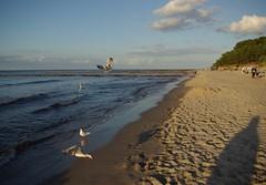 Baltic Sea (horschte68) Tags: k10d koserow ostsee balticsea germany deutschland strand beach inselusedom isleusedom usedom water sommer summer urlaub vacation ferien holiday 2015 juli july