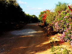 bike path (claudia.joseph16) Tags: sky floral field clouds landscape outdoor path hidden exotic lush oleander olivetree bougainvilea wahy
