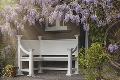 come sit beside me (windermereimages1) Tags: summer love home wales garden hope friendship seat together enjoy sit rest wisteria