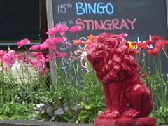 Tonight - Bingo Stingray (shaggy359) Tags: flowers cambridge red flower statue cherry chalk pub stingray events lion event bingo blackboard cambridgeshire hinton cambs