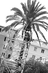 Men at work (stefanobarabino) Tags: street city bw muscles canon workers palm menatwork climbing scaffold 1200d