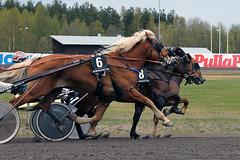 IMG_2419 (lovelymelancholy) Tags: horses horse hevoset hevonen horseraces ravit imrautio ravihevonen oulunravirata