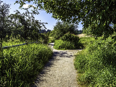 Which path (Tony Tomlin) Tags: park trees crescentbeach blackiespit
