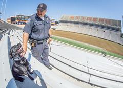 Doc and Officer Owen in the stadium (ken_scar) Tags: bombsniffingdog servicedog clemsonuniversity policedog dog police policeofficer campuspolice deathvalley memorialstadium southcarolina kenscar