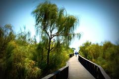 Camino a la Playa. Punta del Moral (Huelva) (Angela Garcia C) Tags: paisaje turismo vegetacin geografiafsica puntadelmoral huelva relieve orografa infraestructura