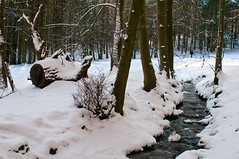(allanimal) Tags: snow nature weather stream stockcategories afszoomnikkor2470mmf28ged