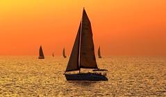 sailing in a golden sea - Tel-Aviv beach (Lior. L) Tags: sea beach golden telaviv sailing silhouettes sailboats sailinginagoldenseatelavivbeach