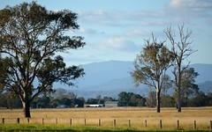 Bar Mountain (dustaway) Tags: trees landscape australia valley nsw paddocks northernrivers australianmountains tweedrange richmondvalley stratheden barmountain afternoonlandscape