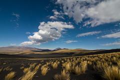 La Payunia (ik_kil) Tags: argentina mendoza volcanos malargue provinciademendoza lapayunia pampasnegras payn reservaprovinciallapayunia