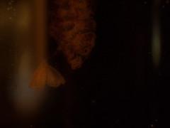 Intruder in the uninhabited camera-beehive at Museum of Natural History -- Wenn Bach Bienen gezüchtet hätte ~ If Bach would have kept Bees -- Kamera Bienenstock Naturhistorisches Museum Wien (hedbavny) Tags: music orange blur macro nature museum licht natur spuren naturalhistory innen bach gelb inside musik makro naturalhistorymuseum beehive unscharf baum glas museumofnaturalhistory nhm vitrine intruder naturhistorischesmuseum honig kunstlicht wachs johannsebastianbach exponat bienenstock bienenwachs unschärfe arvopärt naturhistorischesmuseumwien wienvienna zucht österreichaustria pärt unbewohnt eindringling bienenzucht züchten ausgehöhlt bienenwaben bienennest ausstellungsstück paert honiggelb museumofnaturalhistoryvienna naturhistorischesmuseumderstadtwien arvopaert kamerabienenstock wennbachbienengezüchtethätte