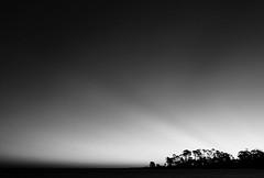 (Donna Irene.) Tags: trees sky blackandwhite beach sunrise florida rays stgeorgeisland donnairene