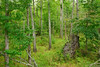 Big Hill Pond State Park (bhophotos) Tags: statepark trees usa nature landscape geotagged nikon tennessee roots trail swamp stump nikkor fallentree midsouth westtennessee d80 2470mmf28g bighillpond bruceoakley bighiilpondstatepark