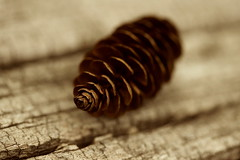 Spruce Cone (Catskills Photography) Tags: macro sepia bokeh sprucecone canon60mmusmmacrolens