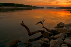 Dead wood in a gold sunset (Erendil80) Tags: longexposure sunset summer reflections poriver argine golena flickraward