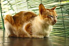 I haven't seen it (Satish Pandiyattil) Tags: cat catnap athome domesticanimal closedeye