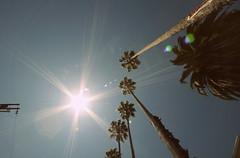 44th Street, Oakland, CA (cory young) Tags: california palms oakland bayarea sunbeam temescal 44thstreet
