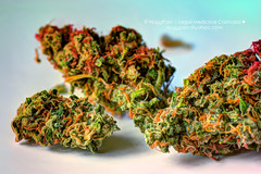 Jack Herer (NuggPorn | Legal Medicinal Cannabis of California) Tags: flowers smoke medicine buds herb cannabis legal medicinalcannabis