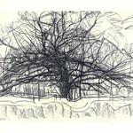 Piet Mondrian, Tree II, 1912