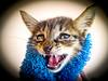 Trasto (Juan Antonio Capó) Tags: animal cat kat feline chat fuji gato felino fujifilm katze mace 猫 gatto חתול kot gat kočka kedi kissa köttur mačka kucing x10 pusa mèo moix گربه кошка 고양이 minino γάτα мачка котка pisică แมว قط кішка 잭 קאַץ վալետ िल्ली fujifilmx10 fujix10
