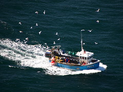 Entourage (Nagraman) Tags: ireland sea lighthouse boat fishing wake gulls northernireland northofireland fishingboat trawler ulster countyantrim antrim rathlin coantrim rathlinisland sonyalpha sonyalpha700 rathlinwest