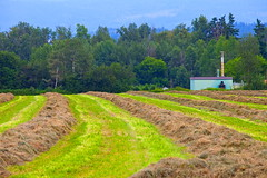 Time to Sow (stevenbulman44) Tags: blue brown tree green field canon sew shuswap natuer