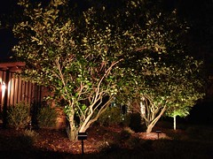Myrtle Beach Tree Lights (Myrtle Beach-Outdoor-Lights) Tags: christmaslight nitelites holidaylight myrtlebeachoutdoorlights outdoorlightsmyrtlebeach myrtlebeachlandscapelighting landscapelightingmyrtlebeach myrtlebeachsecuritylights securitylightsmyrtlebeach myrtlebeachlightingcontractor myrtlebeachoutdoorleds myrtlebeachlowvoltagelight myrtlebeachcommerciallighting commercialoutdoorlightingmyrtlebeach myrtlebeachoutdoorlighting outdoorlightingmyrtlebeach