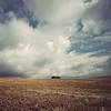 Copse (bigbluewolf) Tags: blue sky cloud field clouds landscape gold golden nikon fields d40