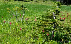 spray park 005 (Eugene Kogan) Tags: park mountain landscape washington mt hiking spray mount rainier wa
