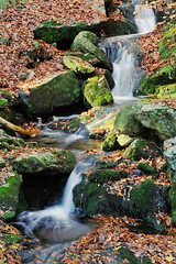 Autumn flow (ste.it) Tags: water leaves foglie flow waterfall rocks long exposure pietre flowing acqua ruscello muschio cascata nd4 scorre