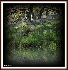 Across the stream. (stu.bloggs..Dont do Sundays) Tags: wood flowers trees light sunlight water bluebells woodland reflections stream shadows foliage views wildflowers dappled northyorkshire glade