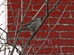 ... (Jean S..) Tags: red tree bird spring day outdoor bricks