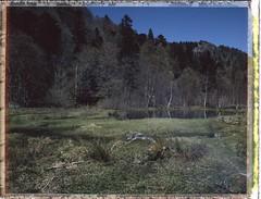 tourbire du Frankenthal - Vosges (JJ_REY) Tags: mountain france analog montagne fuji alsace vosges argentique frankenthal instantfilm peelapart 45a fp100c tourbire toyofield polaroidback405 fujinonswd 90mmebcf56