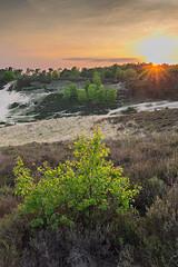 Sunset @ Posbank (Rob Christiaans  Nature and Wildlife) Tags: sunset forest landscape heather veluwe veluwezoom posbank landscapephotography leefilters canon5dmkiii luminositymasks leend06hardgrad leend09hardgrad canonef1635f4is