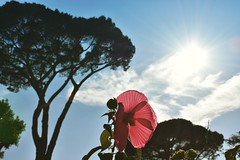 Transparency (lucasangarola) Tags: transparency colors flower street florence italy nature