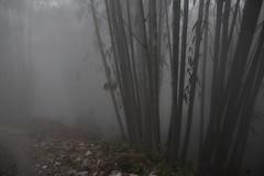 Sa Pa 12 (gsamie) Tags: winter mist color rain fog canon vietnam sapa hmong bamboos t3i 600d gsamie guillaumesamie