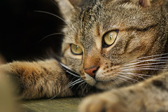 After the walk... (Claudia G. Kukulka) Tags: portrait girl female cat mackerel tabby katze mdchen getigert weiblich