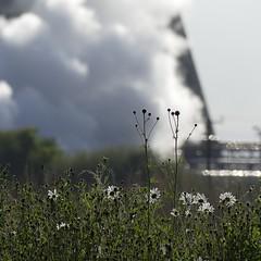 Grangemouth Steam (velton) Tags: forth edinburgh scotland scottish refinery boness kinnell uk cooling tower flowers weeds