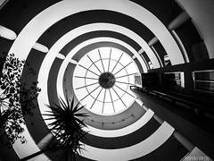 Espiral (Nando Verd) Tags: pez blanco luz arbol ojo monocromo arquitectura y negro edificio centro sombra alicante contraste lampara uga cristal ascensor palmera escaleras techo elda columna petrer cvico ficia