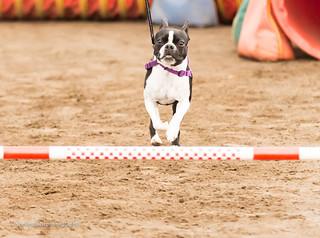 DOGSmart Training Agility Fun Match 2016-50