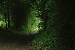 Lane in the Rain (Flossyuk) Tags: green foliage lane