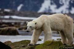 452-5DS01089 (Roy Prasad) Tags: ocean sea mountain lake snow ice expedition nature norway canon sony glacier svalbard arctic fjord prasad spitsbergen iceburg longyearbyen rx10 5ds 1dx royprasad rx10m3 5dsr 1dxm2