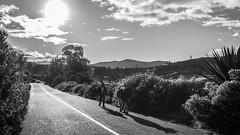 Caminando por el guaico (carlosgonzalezh.colombia) Tags: luz sol azul contraluz arbol colombia camino carretera sombra paisaje cielo nubes andes campo ocaso toro tarde vaca montaas campesino arbustos nario guaitarilla