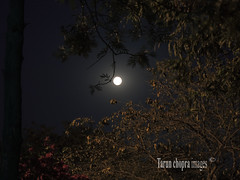 IMG_0592 leisure valley gurgaon (Tarun Chopra) Tags: night fullmoon gurgaon lunar s100 powershots100 wolfmoon canonpowershots100