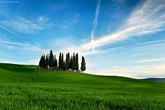 Classic Cypresses #2 (Corsaro078) Tags: landscape tuscany siena toscana cypresses paesaggio d3 colline cretesenesi cipressi sanquirico