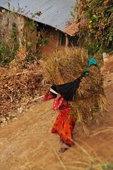Heavy (MelindaChan ^..^) Tags: life nepal people color rural work village mel melinda heavy carry nagarkot  chanmelmel melindachan