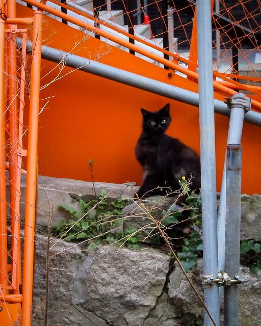 Today's Cat@2012-04-27